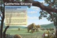 Grazing Panel - California Grazing