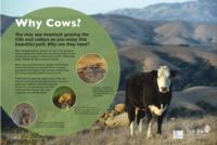 Grazing Panel - Why Cows