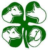 livestock clover