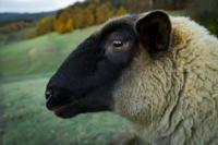 Livestock Equine Pets pexels-photo-241522